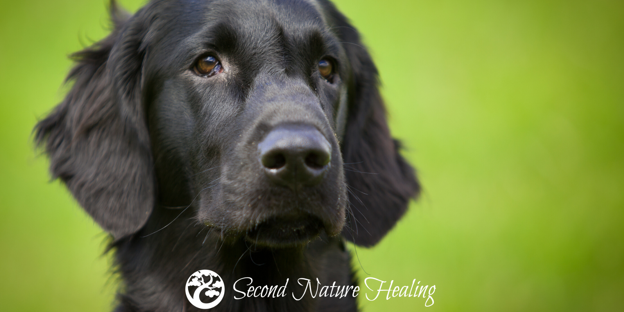 sound healing for dogs